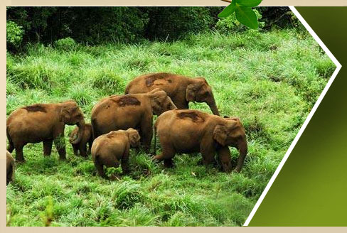 resorts in thekkady, Hotels in thekkady